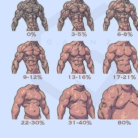 cantidad de grasa en el cuerpo