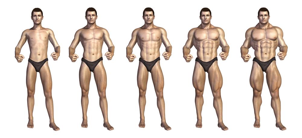 proceso de hipertrofia muscular