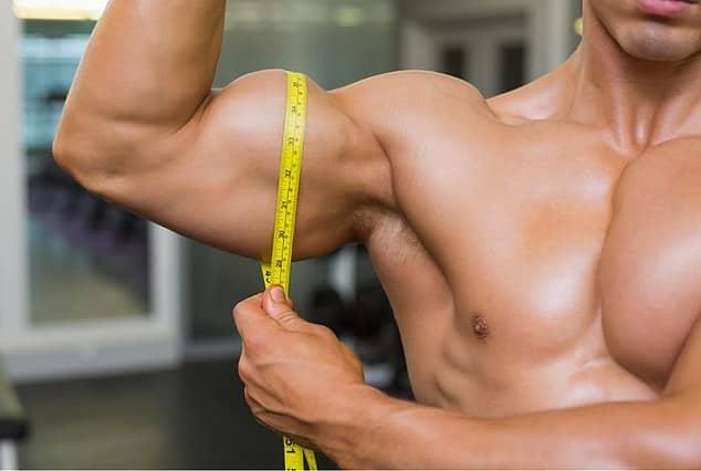 sintesis proteica crecimiento muscular