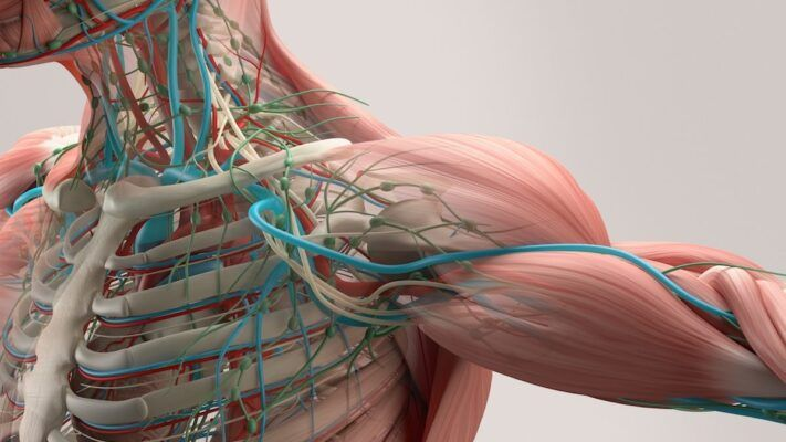 que es la memoria muscular